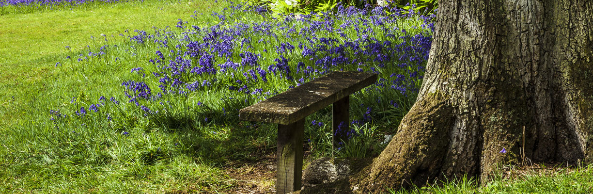 A bench beside some Bluebells