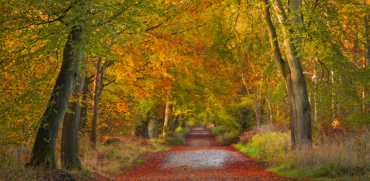 Savernake Forest in the Autumn