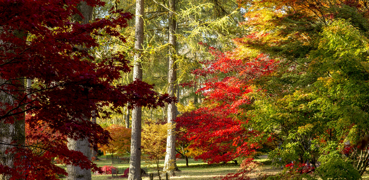Autumn trees at Westonbirt Arboretum
