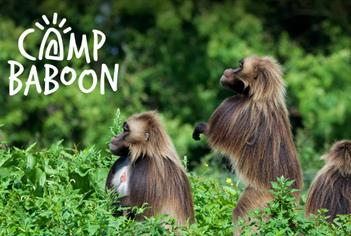 Camp Baboon at Wild Place