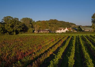 Aldwick Court farm and vineyard